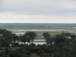 IMG 4277 - Chobe rivier Chobe NP