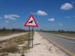 P4297518 - Overstekende elandantilopen Caprivi strip