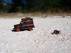 P5047831 - Groot insect achtervolgt houten kanarie!