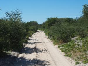 P5047848 - Zandpad naar Gcwihaba Cave