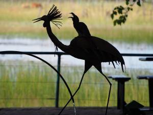 P5078039 - Grijze tok op ijzeren kraanvogel