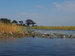 P5098056 - Mokorotochtje door Okavango delta