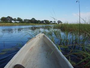 P5098060 - Mokorotochtje door Okavango delta