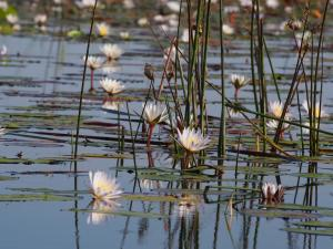 P5098073 - Mokorotochtje door Okavango delta