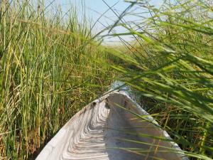 P5098118 - Mokorotochtje door Okavango delta