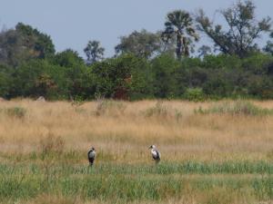 P5098168 - Onbekende vogels