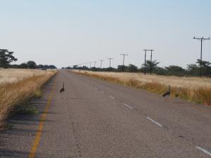 P5128308 - Koritrappen op de weg