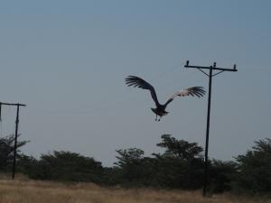 P5128316 - Vliegende koritrap