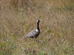 P5128484 - Botswanatrap Nxai Pan NP