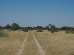 P5138614 - Onderweg naar Greens Baobab