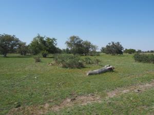 P5138617 - Onderweg naar Greens Baobab