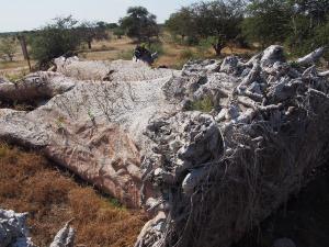 P5138696 - Nieuw leven op Chapmans Baobab