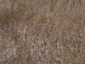 P5158900 - Zoekplaatje, spot de vogel!