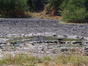 P5169023 - Lethiahau waterhole CKGR