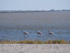 P5190002 - Flamingos bij Kukonje Island