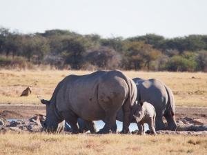 P5230147 - Familie neushoorn Khama Rhino Sanctuary