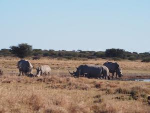 P5230151 - Witte neushoorns Khama Rhino Sanctuary