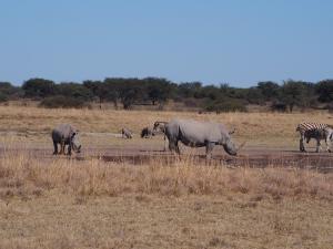 P5240344 - Neushoorns Khama Rhino Sanctuary