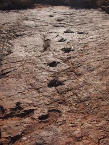 P6091255 - Dino sporen Kalkfeld