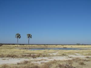 IMG 0198 - Twee Palmen waterhole Etosha NP