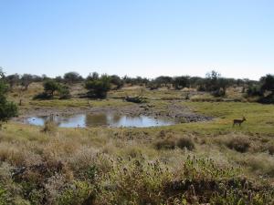 IMG 0203 - Waterhole Etosha NP