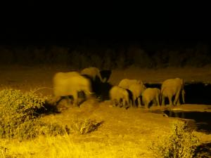 P6131736 - Drinkende olifanten Etosha NP