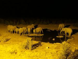 P6131750 - Drinkende olifanten Etosha NP