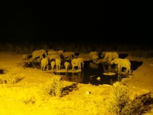 P6131754 - Drinkende olifanten Etosha NP