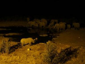 P6131769 - Drinkende olifanten en neushoorn Etosha NP