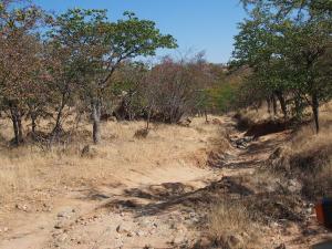 P6181982 - Dit kun je geen pad meer noemen