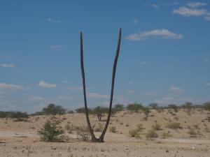 P6192047 - Dit was ooit een palm