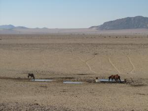 IMG 0583 - Woestijnpaarden en oryx onderweg naar Luderitz