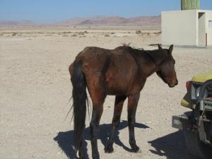 IMG 0586 - Uitgemergelde woestijnpaard onderweg naar Luderitz