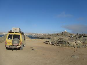 IMG 0601 - Kanarie op Shark Island Luderitz