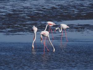 P6282668 - Flamingos Walvisbay