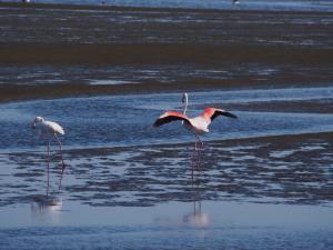 P6282669 - Flamingos Walvisbay