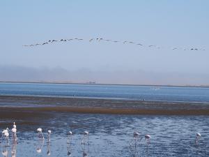 P6282672 - Flamingos en vliegende pelikanen Walvisbay