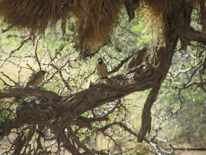 IMG 0915 - Sociale wevervogels