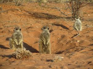 IMG 1069 - Stokstaartjes Meerkat Sanctuary