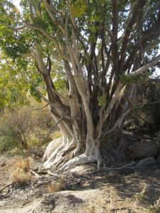 IMG 1171 - Innig verstrengelde vegetatie Augrabies NP
