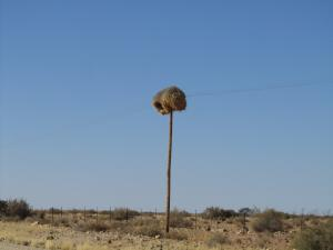 IMG 1231 - Wevervogelnest onderweg naar Calvinia