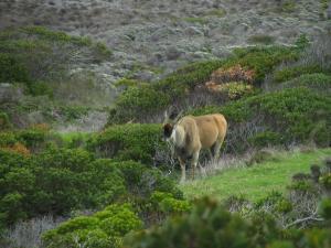IMG 1577 - Elandantilope bij Kaap De Goede Hoop