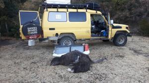 20170724 082333 - Struisvogel bij Mount Everest