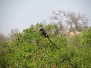 IMG 2347 - Eksterklauwier Kruger NP