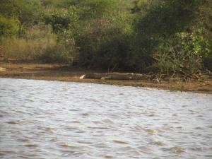 IMG 2399 - Krokodil Kruger NP