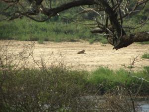IMG 2405 - Leeuw Kruger NP