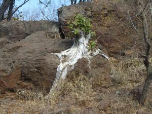 IMG 2499 - Kruger NP