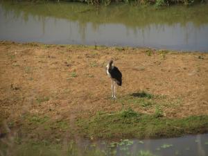 IMG 2503 - Maraboe Kruger NP