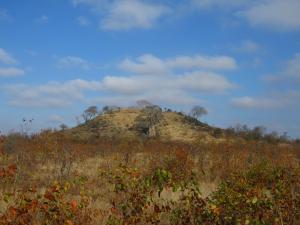 IMG 2546 - Kruger NP