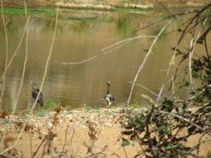 IMG 2581 - Afrikaanse gapers Kruger NP